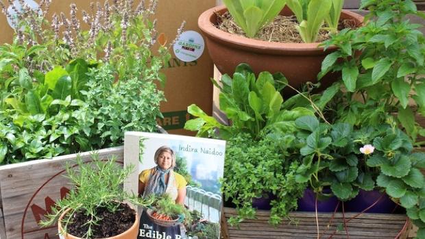 Urban Gardenista