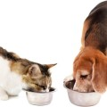 Paws for Life_animals eating