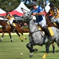 Polo in the City_land rover_field_620x349
